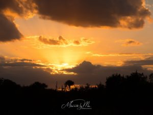 Moments by Mic Fotografie Natur 248 300x225